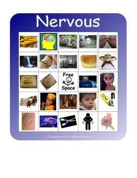 BINGO!  Nervous System Terminology