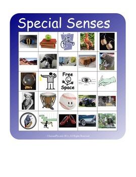 BINGO!  Sensory System Terminology