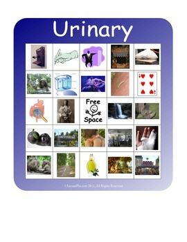 BINGO!  Urinary System Terminology