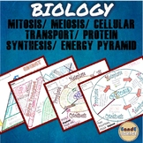 BIOLOGY- Mitosis/ Meiosis/ Protein Synthesis/ Trophic Leve