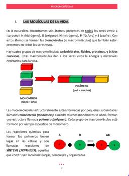 BIOMOLECULES STUDY GUIDE IN SPANISH