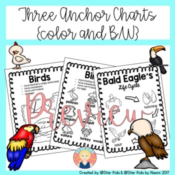birds characteristics life cycle activities and