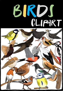 BIRDS - CLIPART