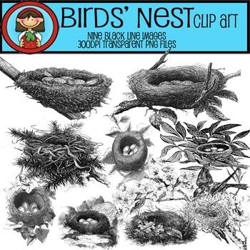 BIRDS' NESTS Clip Art Show eggs spring adaptations or clas