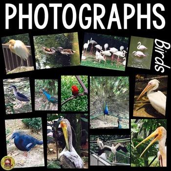BIRDS: PHOTOS