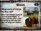 BISON: 10 facts. Fun, engaging PPT (w links & free graphic organizer)