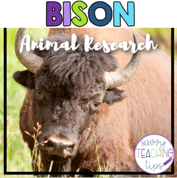 BISON - nonfiction animal research