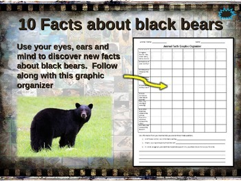 BLACK BEAR: 10 facts, engaging PPT, links, free graphic organizer)