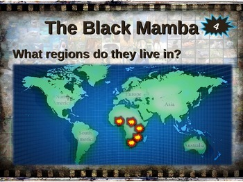 BLACK MAMBA: 10 facts. Fun, engaging PPT (w links & free graphic organizer)