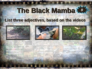 BLACK MAMBA: 10 facts. Fun, engaging PPT (w links & free graphic organizer)