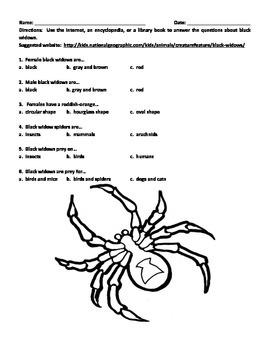 BLACK WIDOW SPIDERS (GRADES 3 - 6)