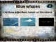 BLUE WHALES: 10 facts. Fun, engaging PPT (w links & free graphic organizer)