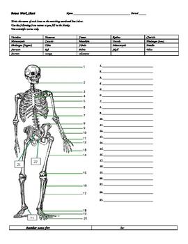 bones worksheet w answers by don thomsens magic beautiful mysterious science. Black Bedroom Furniture Sets. Home Design Ideas