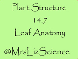 BOOM CARDS Plant Structure and Leaf Anatomy Digital Cards