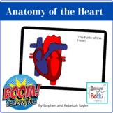 BOOM Card: Heart Anatomy