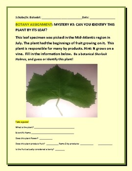 BOTANY MYSTERY #3: CAN YOU IDENTIFY THIS PLANT BY ITS LEAF?