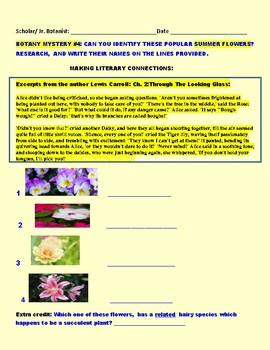 BOTANY MYSTERY #4:  IDENTIFY SUMMER FLOWERS