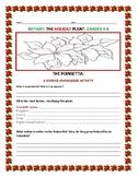 BOTANY: THE POINSETTIA: A HOLIDAY PLANT: A  CROSS CURRICULAR ACTIVITY