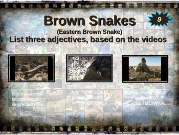 BROWN SNAKE: 10 facts. Fun, engaging PPT (w links & free graphic organizer)
