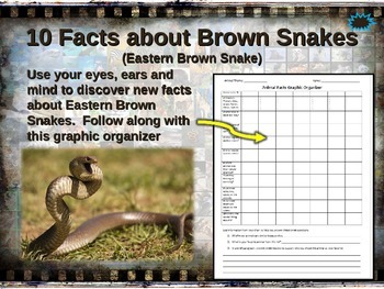 BROWN SNAKE: 10 facts. Fun, engaging PPT (w links & free g