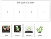 BT021: PLANT (life cycle) strip, book making & worksheets (sequencing) (6pgs)