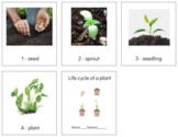 BT022: PLANT (life cycle) strip (sequencing- w\numbers) (2pgs)