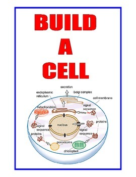 BUILD-A-CELL  2= GIANT  11x17-INCH  3-D Plant Cell and Animal Cell Models
