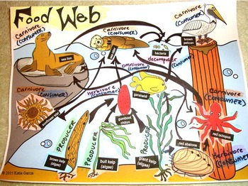 BUILD Your OWN FOOD WEB  - FOOD WEB & ENERGY PYRAMID