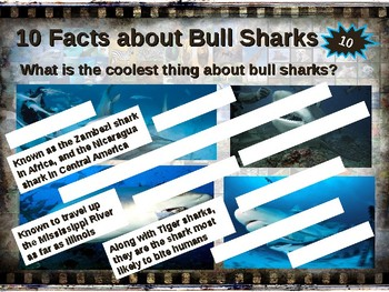 BULL SHARKS: 10 facts. Fun, engaging PPT (w links & free graphic organizer)