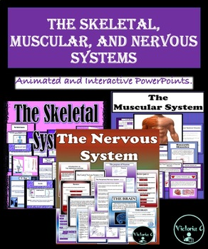 BUNDLE 3 POWERPOINTS SKELETAL, MUSCULAR, AND NERVOUS SYSTEMS