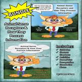 BUNDLE!  Animal Sense Receptors and How They Process Information