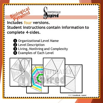 BUNDLE: Biological and Ecological Pyramid 3-D Foldable - 4 Versions of each