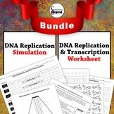 BUNDLE:  DNA Replication and Transcription Worksheet w/ Replication Simulation