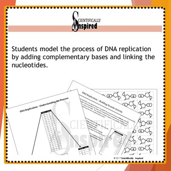 BUNDLE:  DNA Replication and Transcription Worksheet w/ Replication Simulation