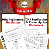 BUNDLE:  DNA Replication and Transcription Worksheet w/ Re