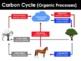BUNDLE - Earth Science PowerPoints
