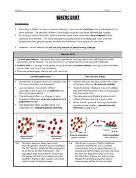 BUNDLE - Evolution Worksheets