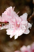 BUNDLE Stock Photo: Spring Flowers- Personal & Commercial Use