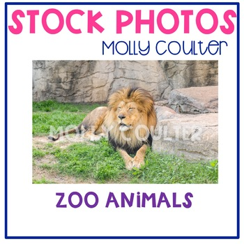 BUNDLE Stock Photo: Zoo Animal BUNDLE -Personal & Commercial Use