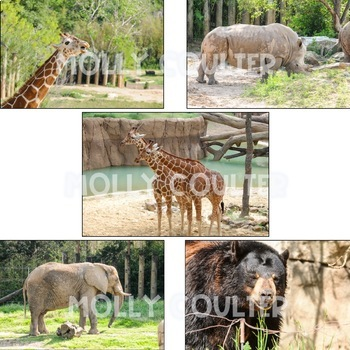 Stock Photo: Zoo Animals -Personal & Commercial Use