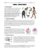 BUNDLE - Taxonomy Worksheets