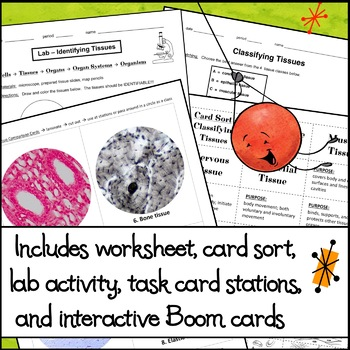 BUNDLE of LESSONS - Tissue Identification and Classification