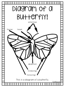BUNDLED: All About Butterflies and Butterfly Expert Groups