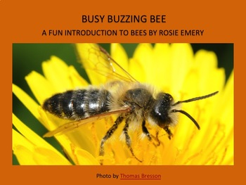 BUSY BUZZING BEE!