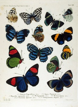SCIENCE - BUTTERFLIES PUBLIC DOMAIN CLIP ART (129 IMAGES, SALE)