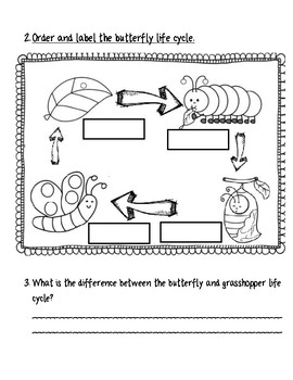 BUTTERFLY AND FROG LIFE CYCLE