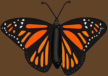 BUTTERFLY CYCLE CLIP ART- Fun Creatives