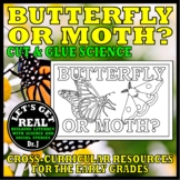 BUTTERFLY OR MOTH? (Cut and Glue Science)