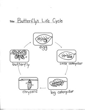 BUTTERFLY'S LIFE CYCLE- GRAPHIC ORGANIZERS--Young Artists