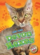 Devon Rexes